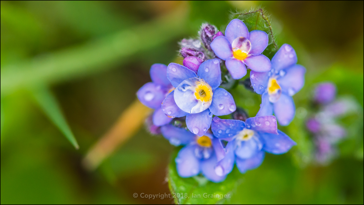 Forget Me Drops