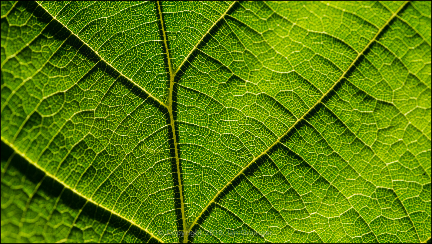 Leafy Abstract